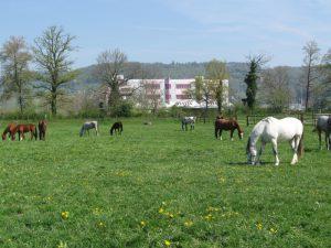 Abb.: Unsere Pferde und Fohlen auf der Weide